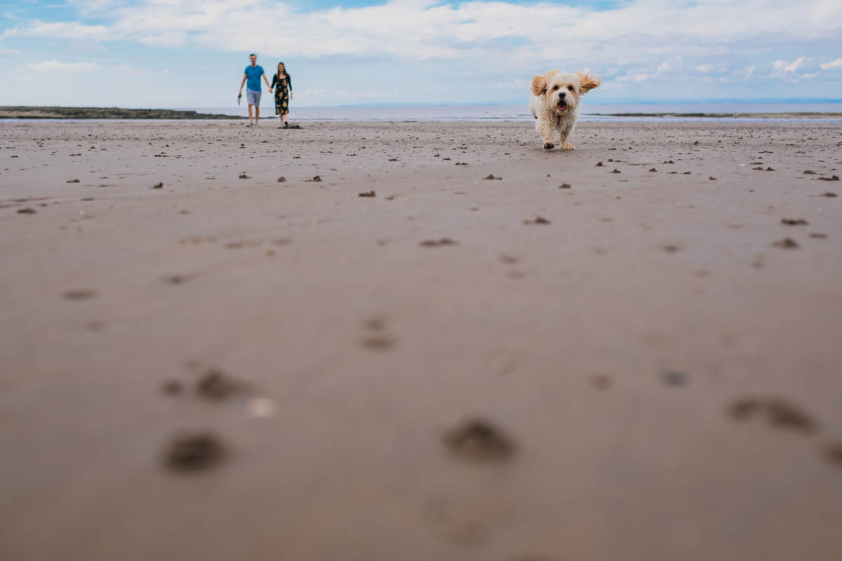 dog runs along the beach with engaged couple behind